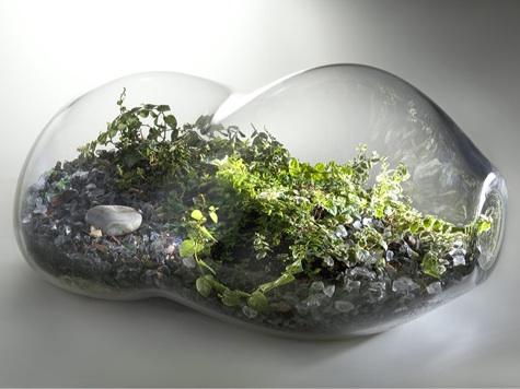 Plant Terrarium Ideas